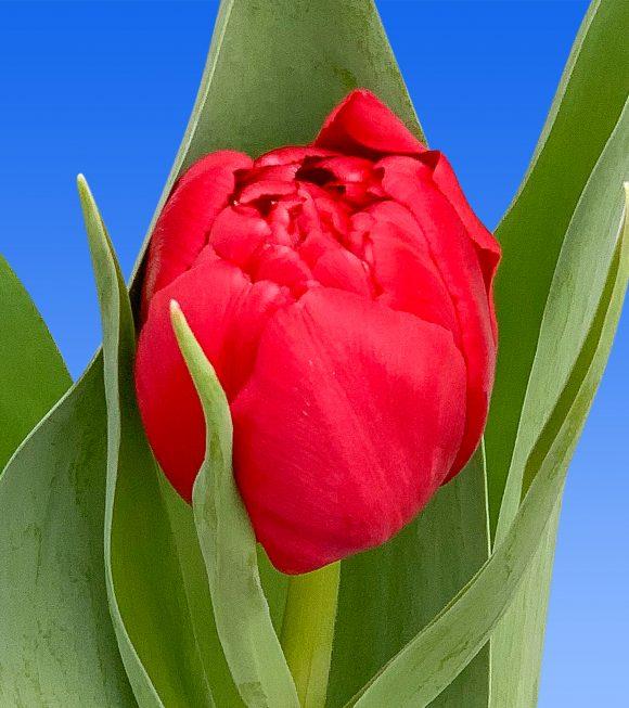 Afbeelding van een item uit ons assortiment Red Horizon