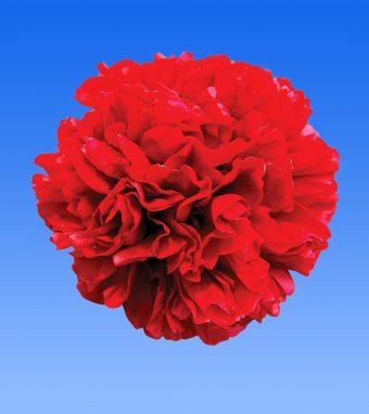 Image of an item from our rangepeoniesChristmas Velvet