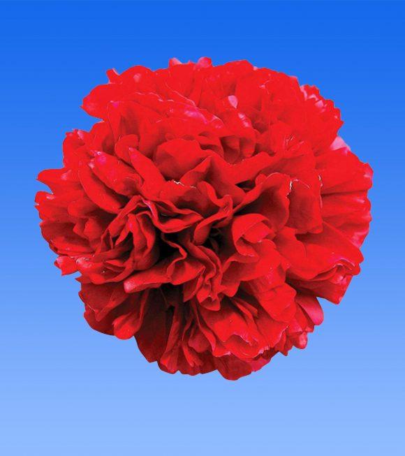Image of an item from our range Christmas Velvet