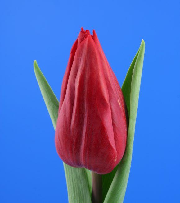 Afbeelding van een item uit ons assortiment Strong Love