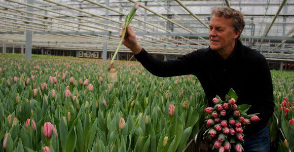 Teamspel zorgt bij Borst Bloembollen voor kwaliteit en diversiteit' aldus Agrarisch West-Friesland