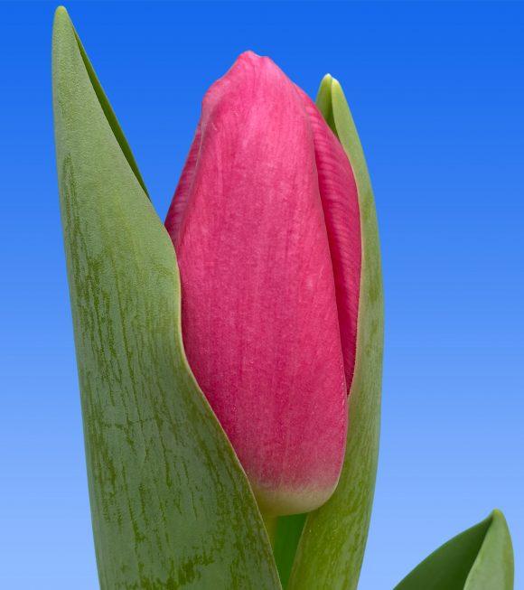 Afbeelding van een item uit ons assortiment Pink Sky
